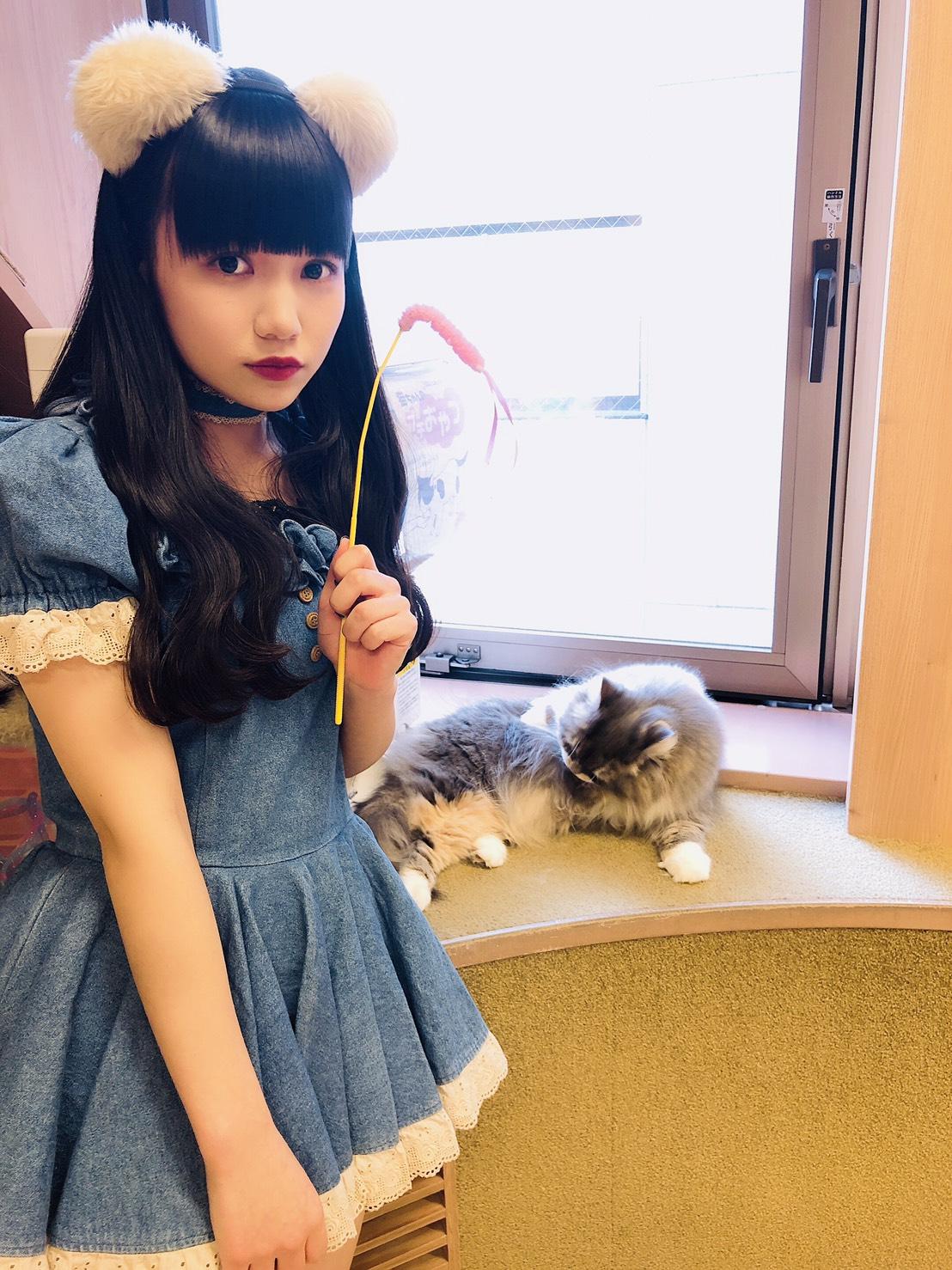 大門 猫カフェ1日店長