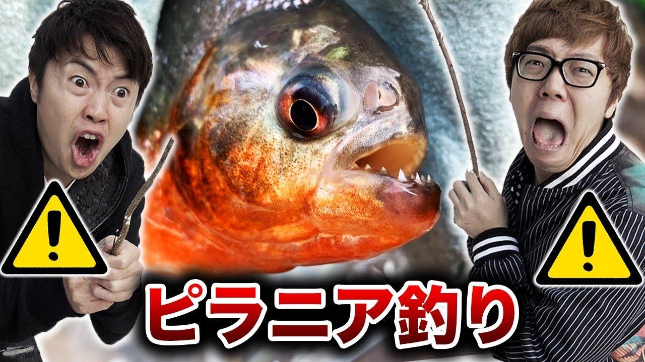 史上最恐の #ピラニア釣り イベント!!