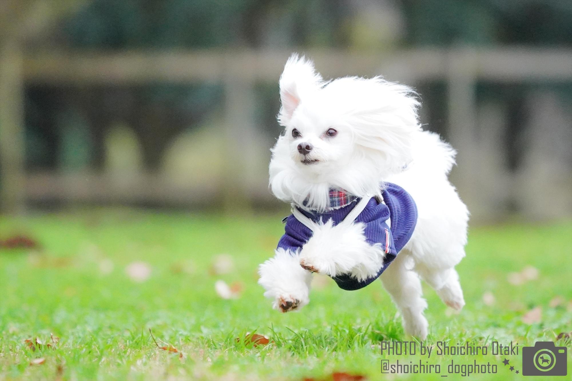 BULLET DOG撮影会@マルフェス2020