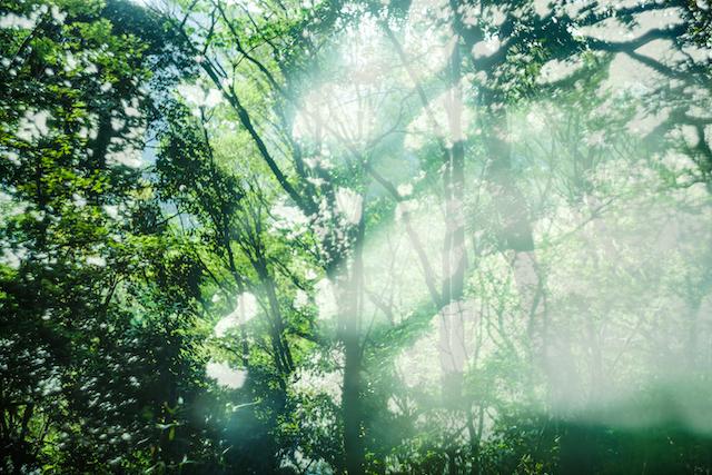 「白いピアノと森のうた」2019_05_24